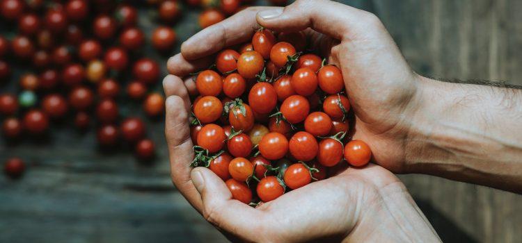 Röda tomater i två kupade händer