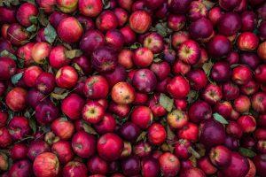Äpplen i röda nyanser