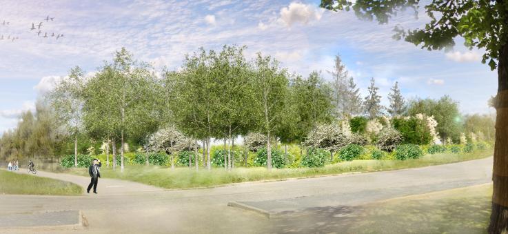 Växter och träd vid en väg. Bakom växtligheten finns ett reningsverk som inte syns.