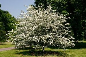 Foto på ett träd i blomning